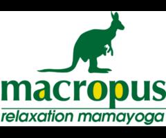 ヨガ教室 macropus